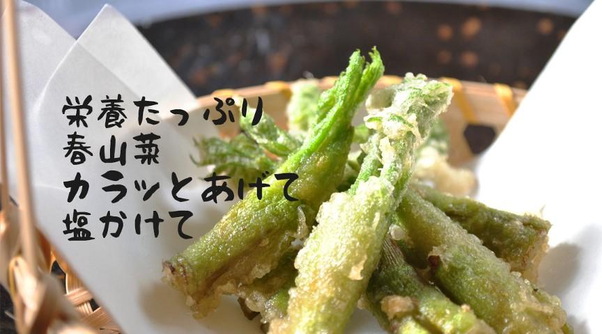 【千葉・香取】美肌成分たっぷり!春に芽吹く山菜収穫〜炊き込みご飯と野菜汁作り〜