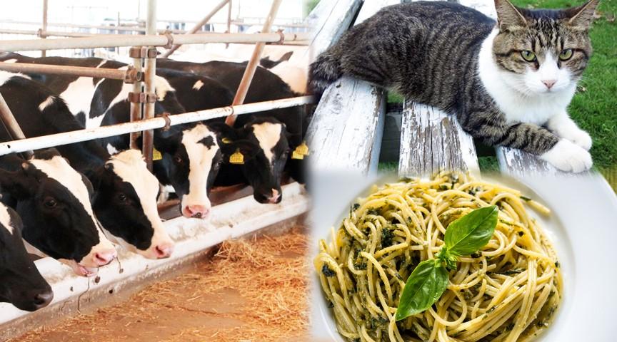 牧場で犬や猫、ヤギと触れ合う〜牛舎見学とダブルソースパスタ作り〜