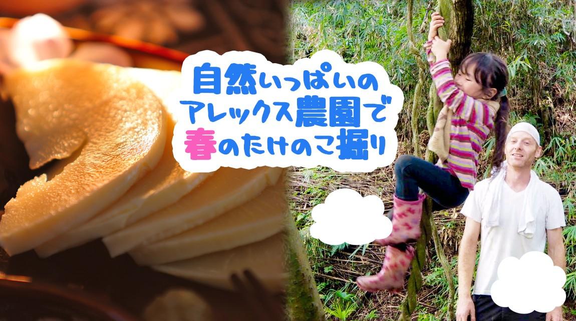 【神奈川・横浜】ゴールデンウィーク穴場スポット!トトロの森で竹の子掘り!〜竹の子のお刺身とオリジナルピザ〜