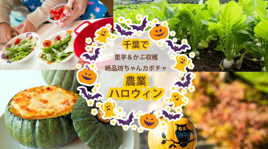 【千葉県山武市】農業ハロウィン♪里芋&カブ収穫に、坊ちゃんカボチャを堪能!