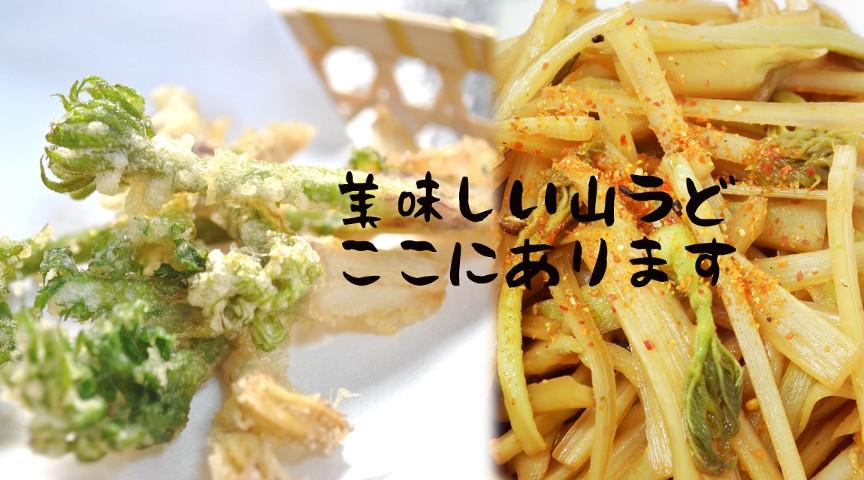 【千葉・香取】GW限定!春の山菜うど収穫〜竹の炊き込みご飯と野菜汁作り〜