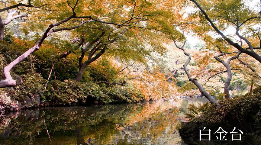 【白金台】白金地区の紅葉を楽しむ秋色散歩ツアー <街歩き>