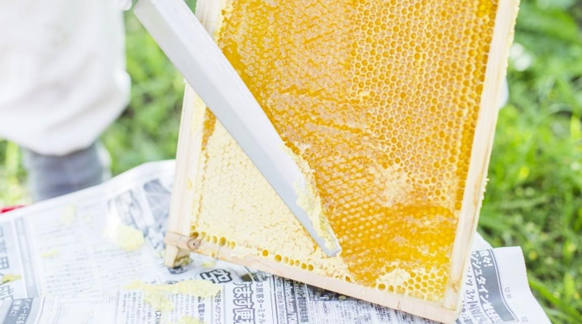 【千葉・君津】養蜂体験で極上ハチミツ!〜美しい里山で紡ぐ自然と人間の営み〜