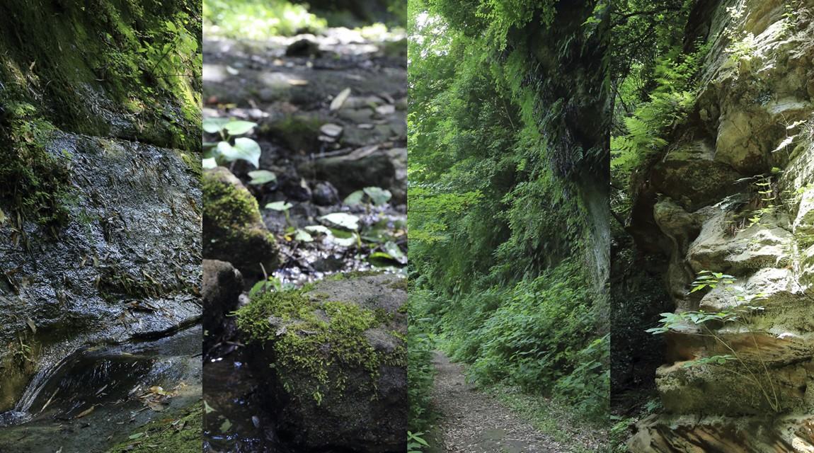 鎌倉切通しを撮りに行こう。フォトグラファーといく「鎌倉の自然と古道散歩」