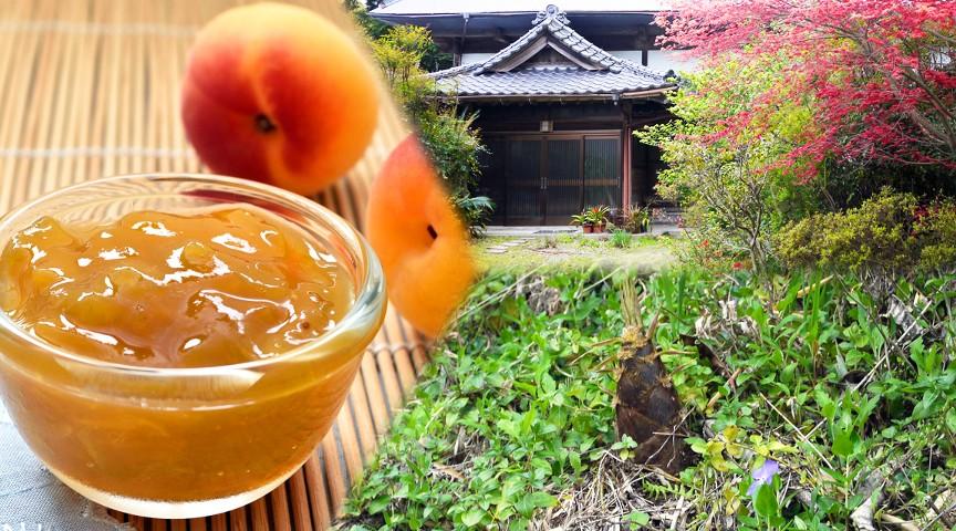 【築100年!千葉の古民家へ】今が旬のタケノコ淡竹と梅収穫!〜秘伝の梅ジャムと味噌汁作り〜