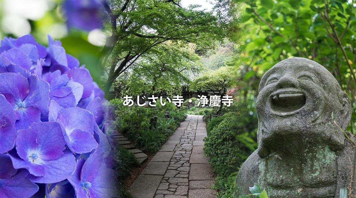 【川崎】咲き誇る1000本のあじさい!『浄慶寺』&ユーモラスな羅漢像の撮影散策!