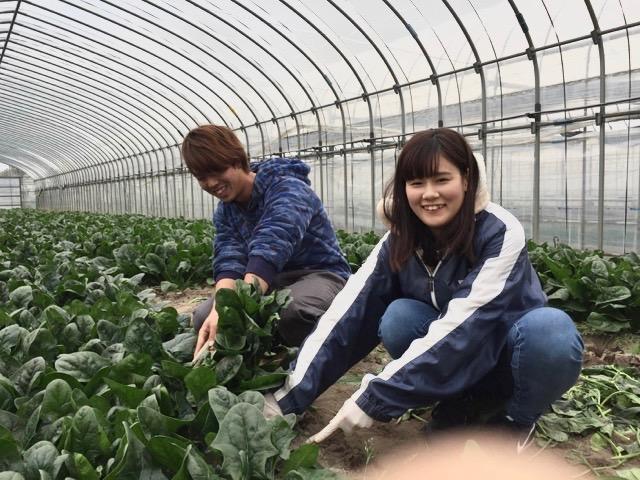 旬の野菜の収穫体験!(キャベツ・ブロッコリー・ホウレンソウなど)