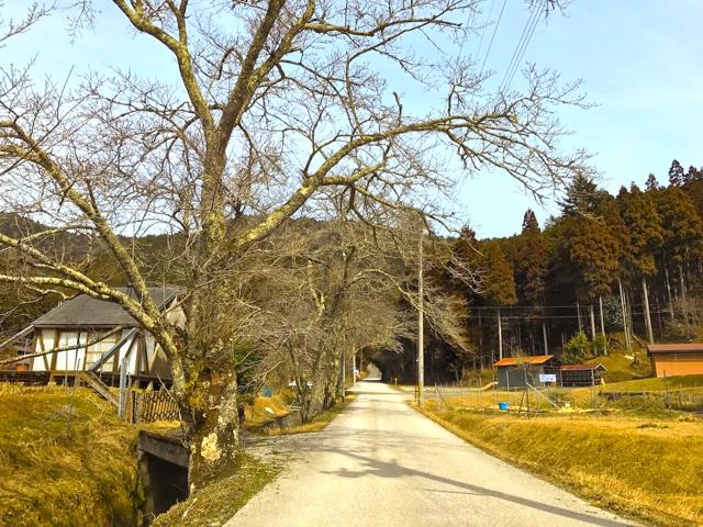 山国 常照皇寺参道の桜並木