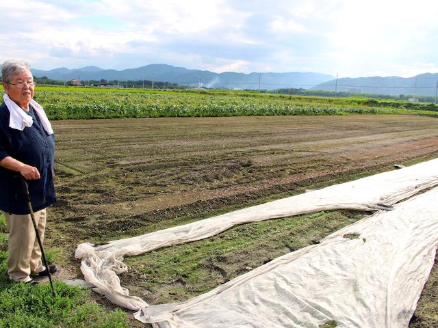 小松菜の収穫!