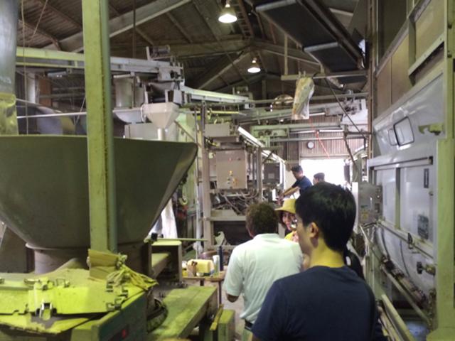 荒茶工場見学