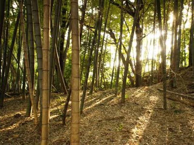 竹林に移動