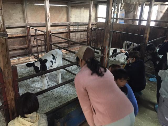 エサやり・子牛とふれあい体験