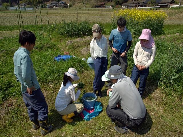 畑見学・収穫体験