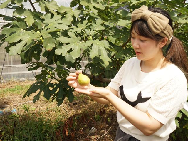 STEP3 旬の果物の収穫!