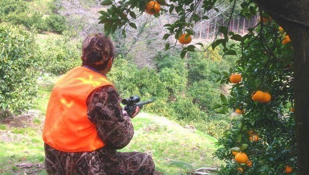 【鳥の解体・ジビエ】鳥の追い払い・獲物の解体をして、ジビエ料理を味わう!現代の狩猟と食を考える旅!