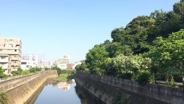 【横浜・日吉】春の野鳥と植物を発見!自然観察ウォーキング!~春の訪れを見つける街歩き~