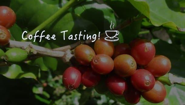 【徳之島】超レア!国産の徳之島コーヒー 畑の手入れ・テイスティング体験