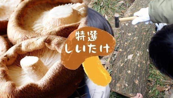 【千葉・木更津】50年の原木栽培で肉厚!旬の椎茸狩りとBBQ〜きのこの菌打ち体験も〜