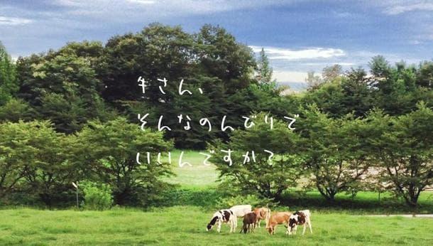 【東京・八王子】牛に惚れる1日♪乳しぼりや子牛のお散歩ができる牧場体験!