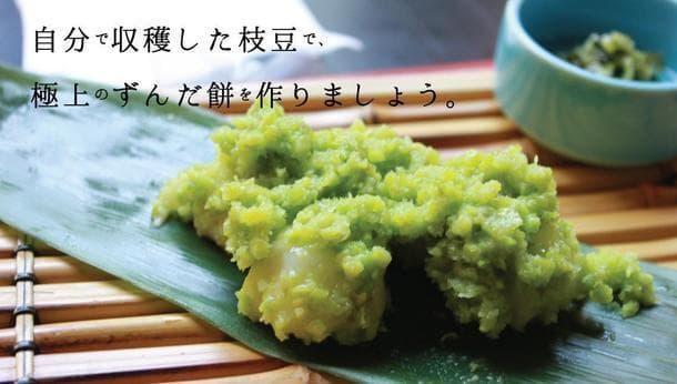 【枝豆収穫&ずんだ餅づくり】東京町田の里山で、採れたての枝豆でずんだ餅を手づくりする体験!