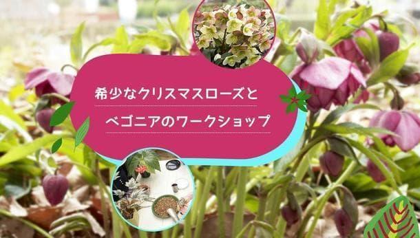 【東京都府中市】老舗ナーセリーで学ぶオリジナル園芸体験!!