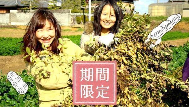 【兵庫県神戸市】ジャンボ生落花生の収穫体験&かまど炊きごはん《9・10月限定》