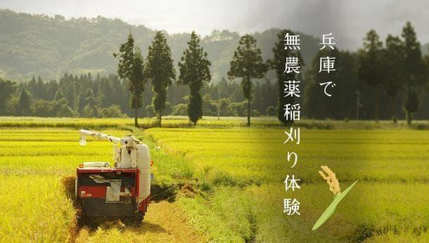 【自然いっぱいの棚田で稲刈体験】農薬・化学肥料を使わない棚田で稲刈を楽しむ旅!@兵庫県神崎郡