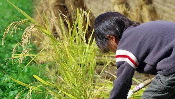 【千葉で稲刈り】稲刈り、炊きたてご飯など、お米を満喫できる体験!