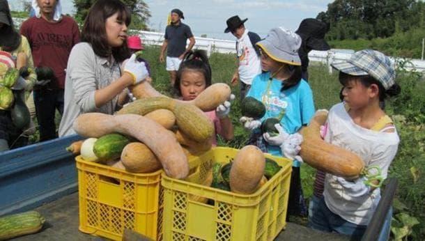 柏で秋の農業体験。話題の健康野菜「四角豆」の収穫体験&畑で楽しむ「野菜天ぷら」