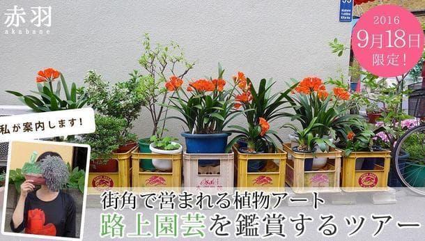 【9月18日限定】街角で営まれる園芸活動『路上園芸』を鑑賞するツアー in赤羽<街歩き>