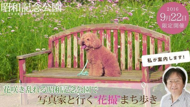 """プロの写真家と行く""""花撮""""まち歩き in昭和記念公園<街歩き>"""