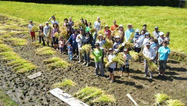 【3日間限定・神戸で稲刈り体験!】稲刈りを五感いっぱいで味わおう!秋の稲刈りワークショップ2016@兵庫県神戸市