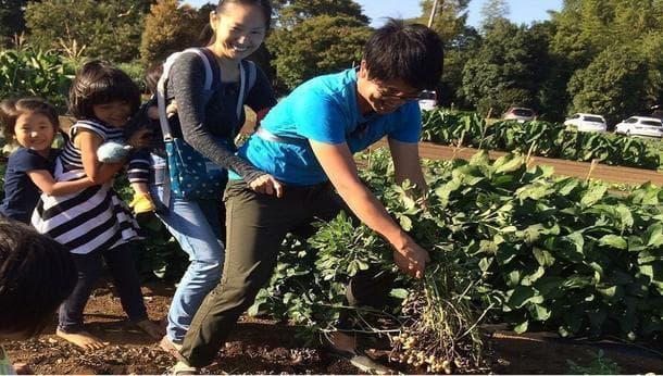 【千葉木更津】シルバーウィーク限定!今しかできない落花生収穫体験!落とし穴作りも...?