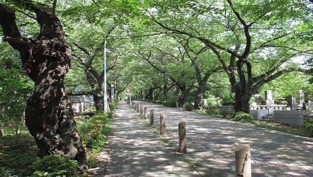 【東京・青山】プロの映像作家と行く!季節の花と「明治維新」の墓碑めぐり!