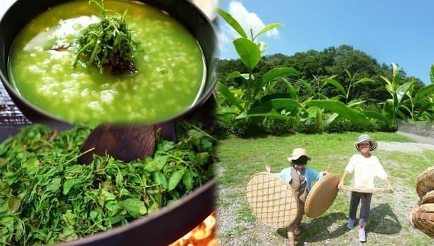 無農薬茶畑でお茶摘みから製茶まで。ランチは茶粥とお茶ゼリー