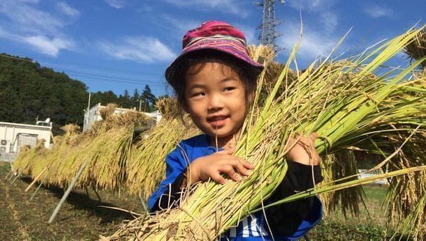 【埼玉・秩父】有機栽培の稲刈り体験!自給自足レストランでイタリアンランチ♪