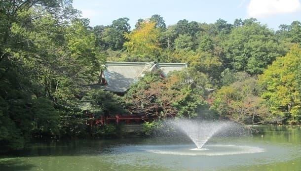 紫陽花アルク=吉祥寺駅から井の頭公園、玉川上水、太宰治、富士見跨線橋!