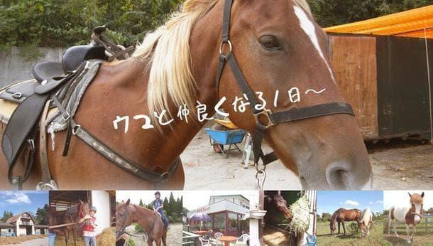 【千葉】子どもも出来る!「ミラクル☆乗馬体験」~馬と仲良くなる1日~