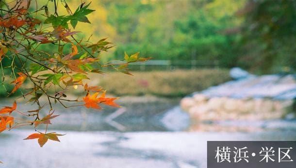 【横浜・栄区】コース②日本刀職人と歩く。栄区周辺の「相州伝の地」。上郷森の家でランチを楽しもう<街歩き>