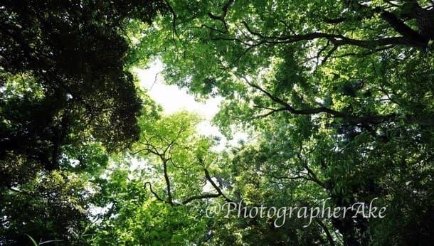 朝の木漏れ日に癒されよう。フォトグラファーと「鎌倉の自然と古道散歩」