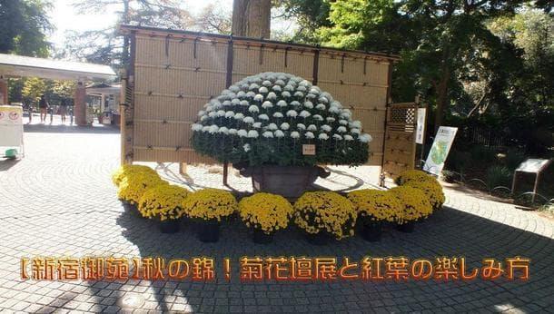 【新宿御苑】秋の錦!菊花壇展と紅葉満喫ツアー