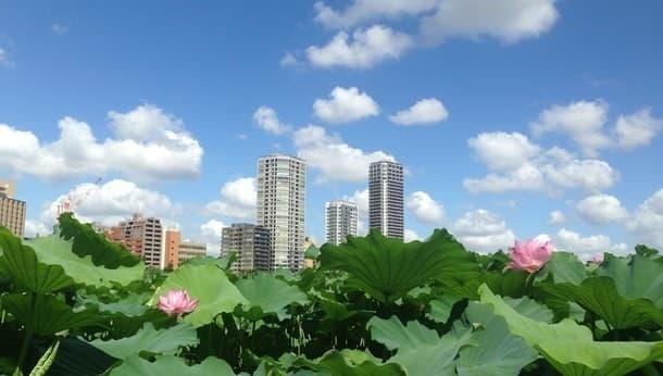 【上野周辺】江戸の街づくりと極楽浄土・不老長寿への願い