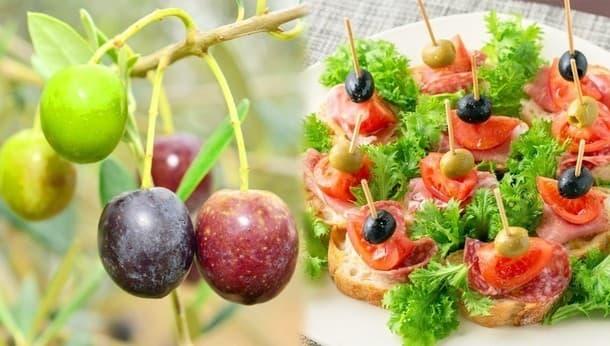 地中海気分を味わう、オリーブ収穫とピンチョスづくり。オリーブの木でリース作りも