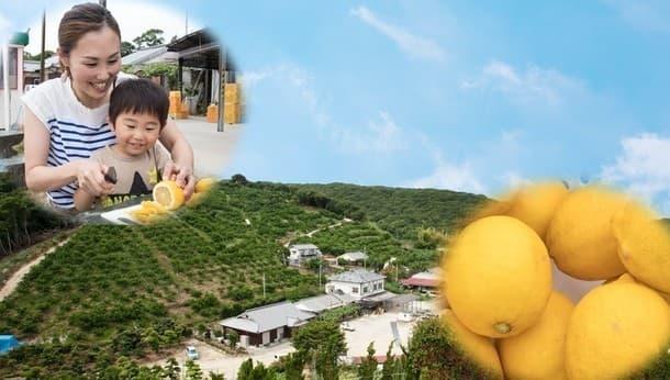 瀬戸内海を一望できる広大な農園でレモンのデザートを作って満喫