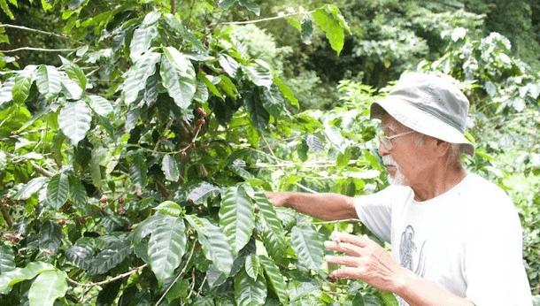 超ユニーク!徳之島でしか味わえない、貴重な国産コーヒーの魅力体験!