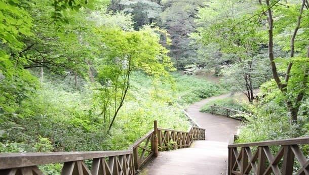 【川崎・生田緑地】ナチュラリストがご案内!春の野鳥と植物を発見する自然観察ウォーキング!