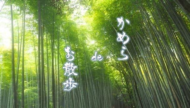 【京都・写真】プロ写真家と行く!新緑の嵯峨野でカメラ散歩!~カメラでも、スマホでも、誰でも最高の一枚が撮れる~