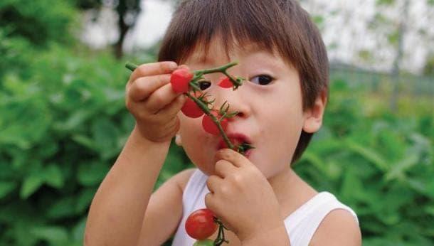 【野菜ソムリエに学ぶ】美味しいキュウリ、ナス、トマトの育て方!トマト6種類食べ比べ付きの旅!