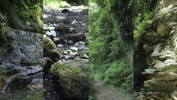 鎌倉切通しを撮りに行こう!フォトグラファーと「鎌倉の自然と古道散歩」